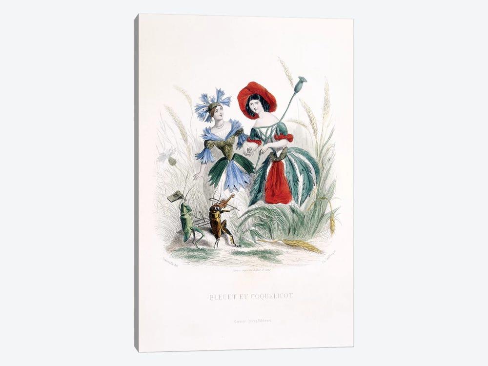 Cornflower & Poppy (Bleuet et Coquelicot) by J.J. Grandville 1-piece Art Print