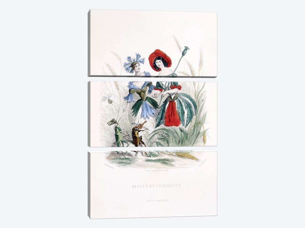 Cornflower & Poppy (Bleuet et Coquelicot) by J.J. Grandville 3-piece Art Print