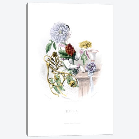 Dahlia Canvas Print #JJG3} by J.J. Grandville Canvas Artwork