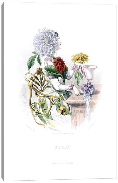Dahlia Canvas Art Print