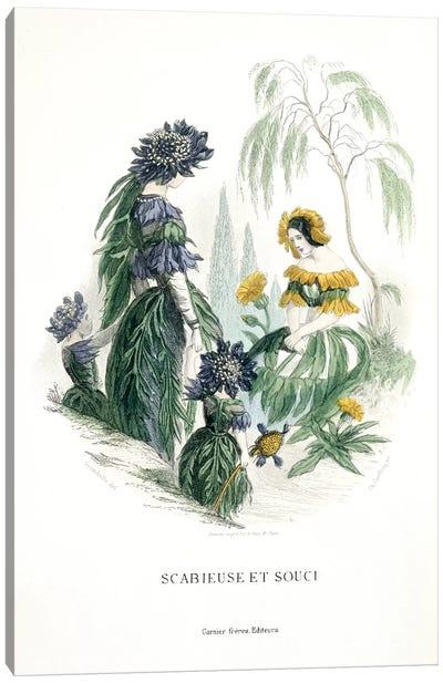 Mourning Bride & Marigold (Scabieuse et Souci) Canvas Art Print