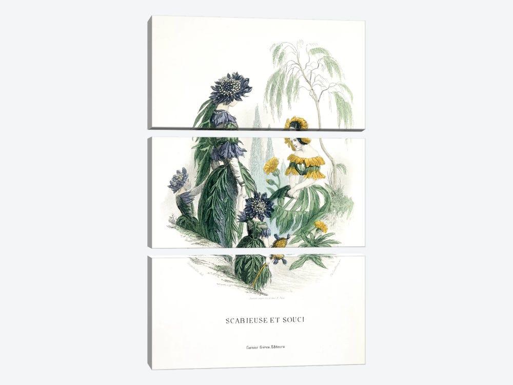 Mourning Bride & Marigold (Scabieuse et Souci) by J.J. Grandville 3-piece Canvas Art