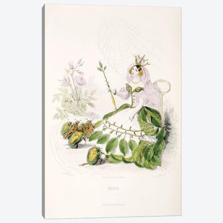 Rose Canvas Print #JJG6} by J.J. Grandville Canvas Print