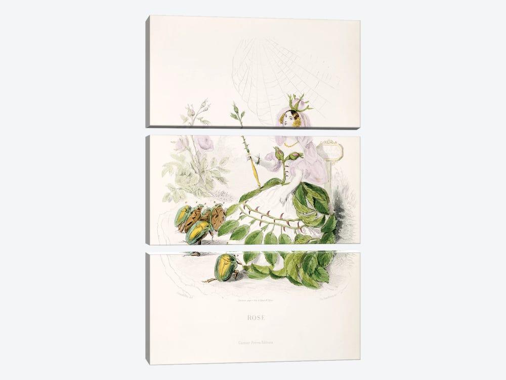 Rose by J.J. Grandville 3-piece Canvas Print