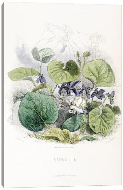 Viola (Violette) Canvas Art Print