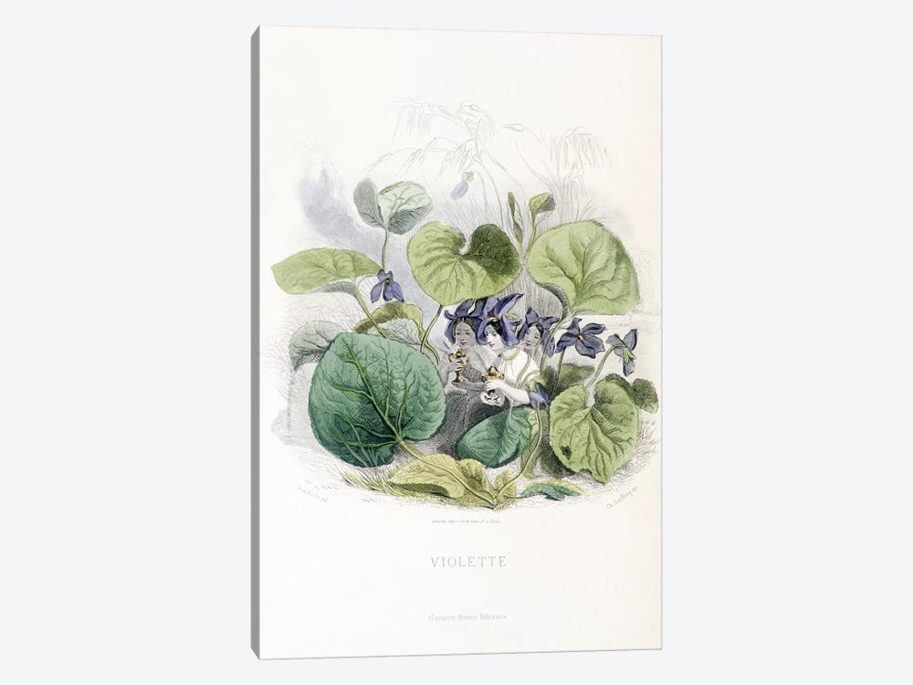 Viola (Violette) by J.J. Grandville 1-piece Canvas Wall Art