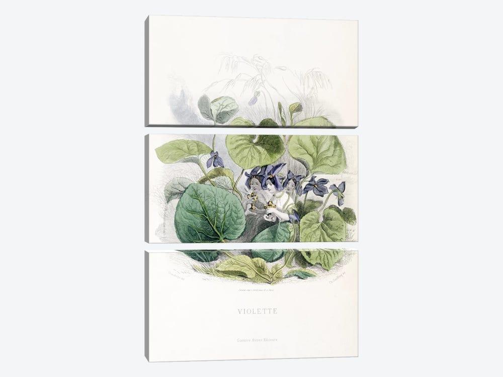 Viola (Violette) by J.J. Grandville 3-piece Canvas Wall Art