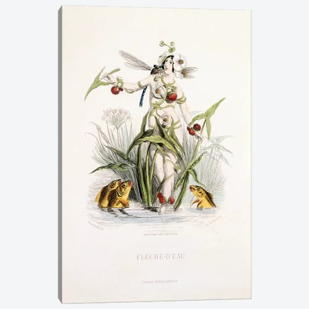 Water Arrow (Fleche d'Eau) Canvas Print #JJG8} by J.J. Grandville Canvas Artwork