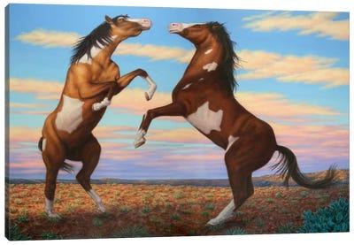 Boxing Horses Canvas Art Print