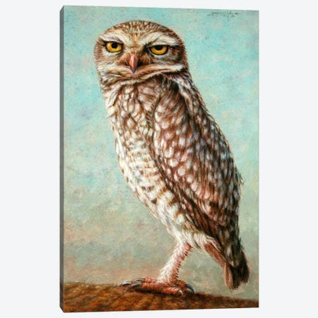 Burrowing Owl Canvas Print #JJN13} by James W. Johnson Canvas Print