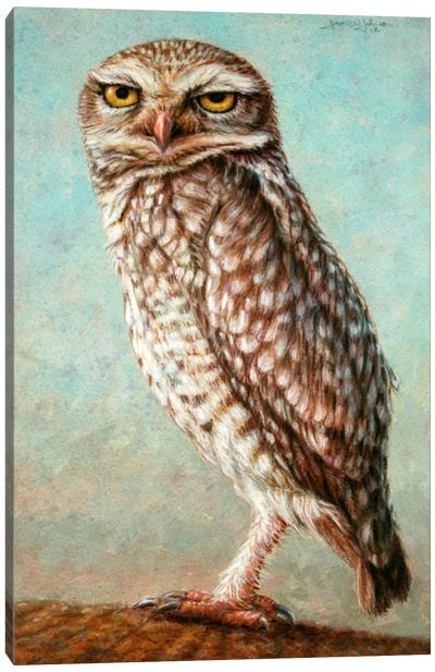 Burrowing Owl Canvas Art Print