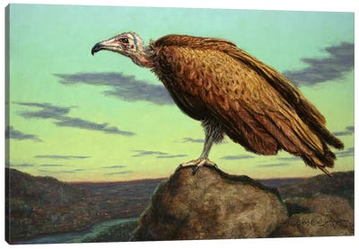 Buzzard Rock Canvas Art Print