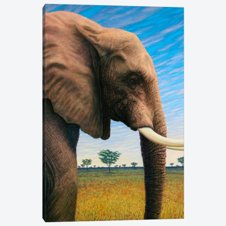 Elephant Canvas Print #JJN16} by James W. Johnson Canvas Wall Art