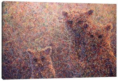 3 Bears Canvas Art Print