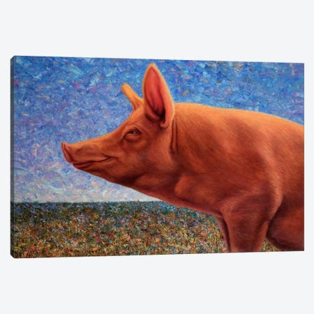 Free Range Pig Canvas Print #JJN20} by James W. Johnson Canvas Wall Art