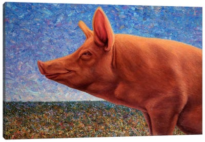Free Range Pig Canvas Print #JJN20
