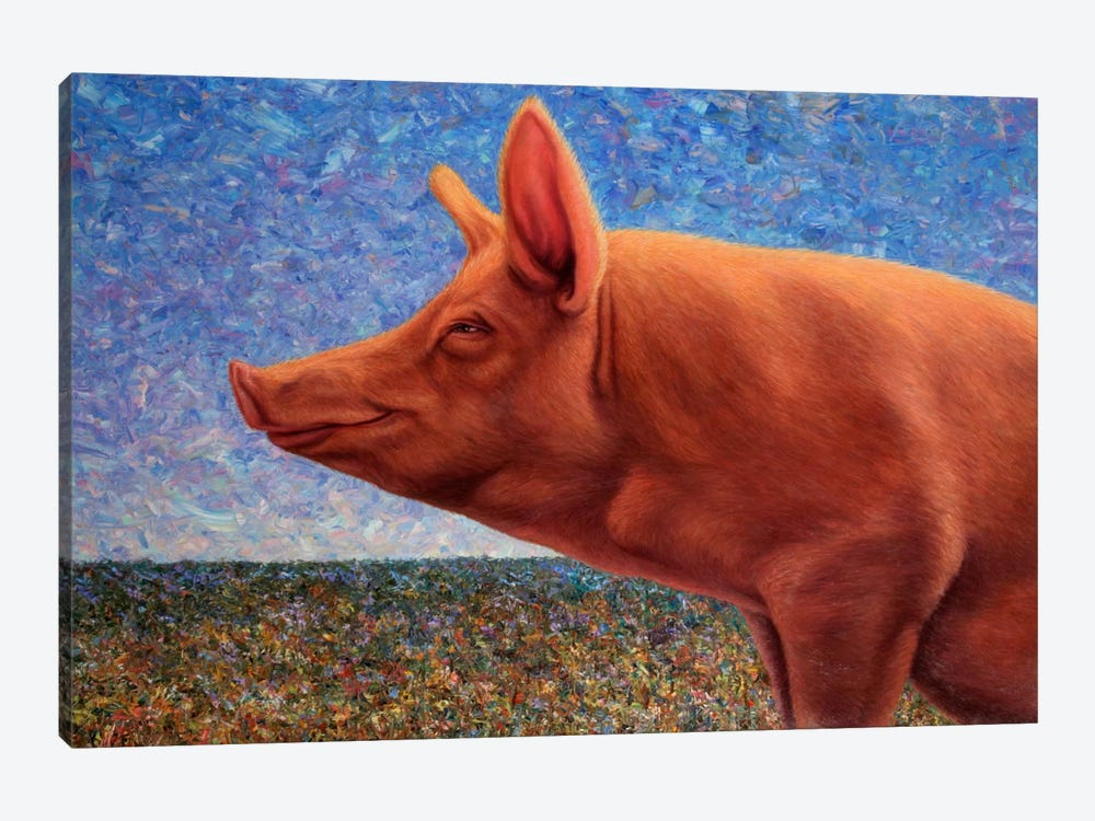 Free Range Pig by James W. Johnson 1-piece Canvas Art Print