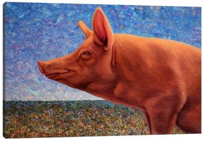 Free Range Pig Canvas Art Print