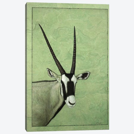 Gemsbok Canvas Print #JJN21} by James W. Johnson Canvas Wall Art