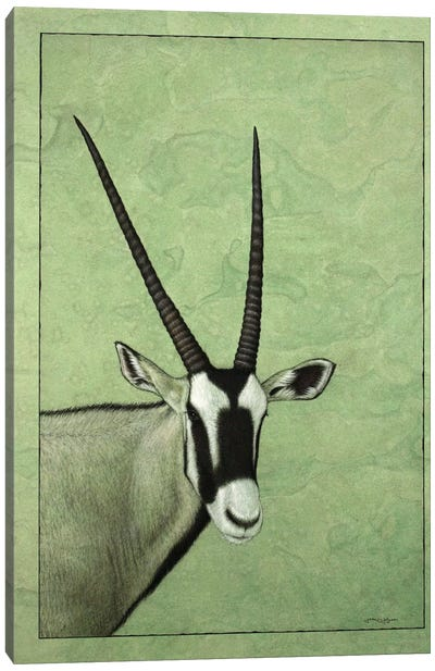 Gemsbok Canvas Art Print