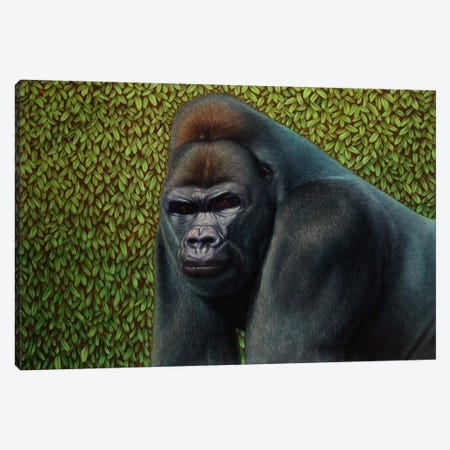 Gorilla With A Hedge Canvas Print #JJN23} by James W. Johnson Canvas Artwork