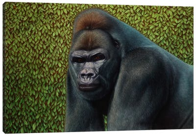 Gorilla With A Hedge Canvas Art Print