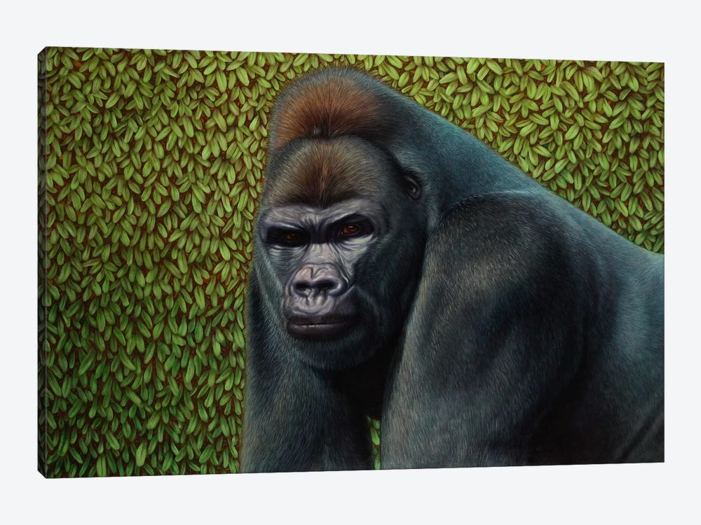 Gorilla With A Hedge by James W. Johnson 1-piece Canvas Art