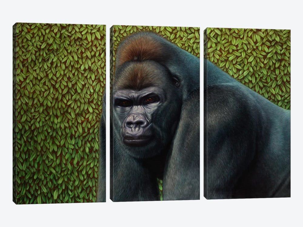 Gorilla With A Hedge by James W. Johnson 3-piece Canvas Art