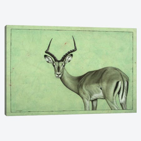 Impala Canvas Print #JJN26} by James W. Johnson Canvas Print