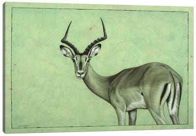 Impala Canvas Art Print