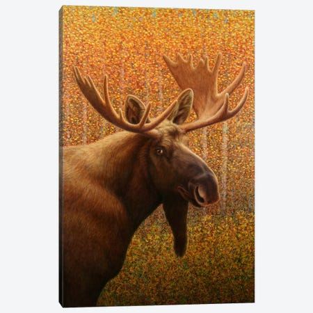 Moose Canvas Print #JJN29} by James W. Johnson Canvas Art