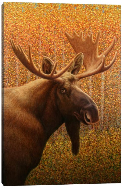 Moose Canvas Print #JJN29