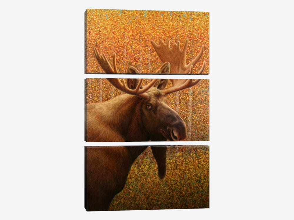 Moose by James W. Johnson 3-piece Canvas Artwork
