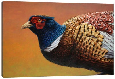 Pheasant Canvas Art Print