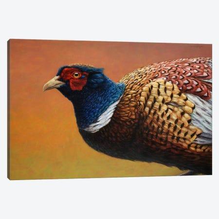 Pheasant Canvas Print #JJN32} by James W. Johnson Art Print