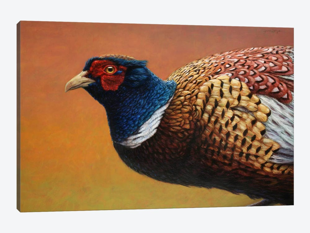 Pheasant by James W. Johnson 1-piece Canvas Art