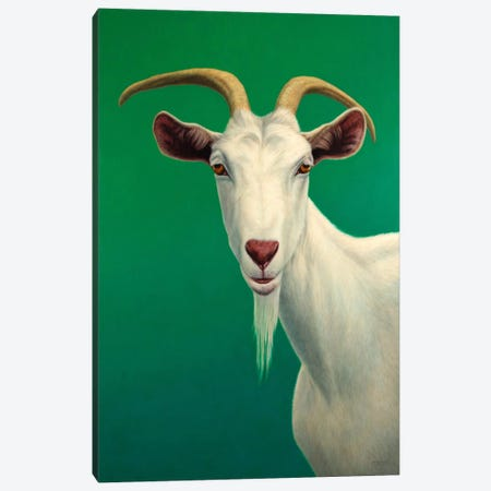 Portrait of A Goat Canvas Print #JJN33} by James W. Johnson Canvas Art Print