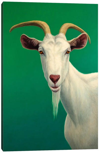 Portrait of A Goat Canvas Art Print