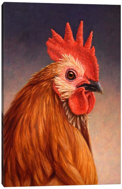 Rooster Canvas Print #JJN37