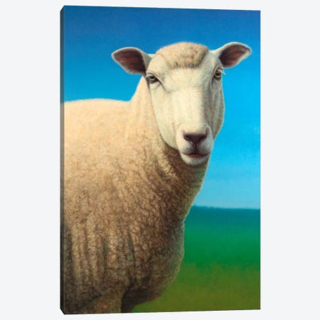 Sheep Canvas Print #JJN39} by James W. Johnson Canvas Art Print