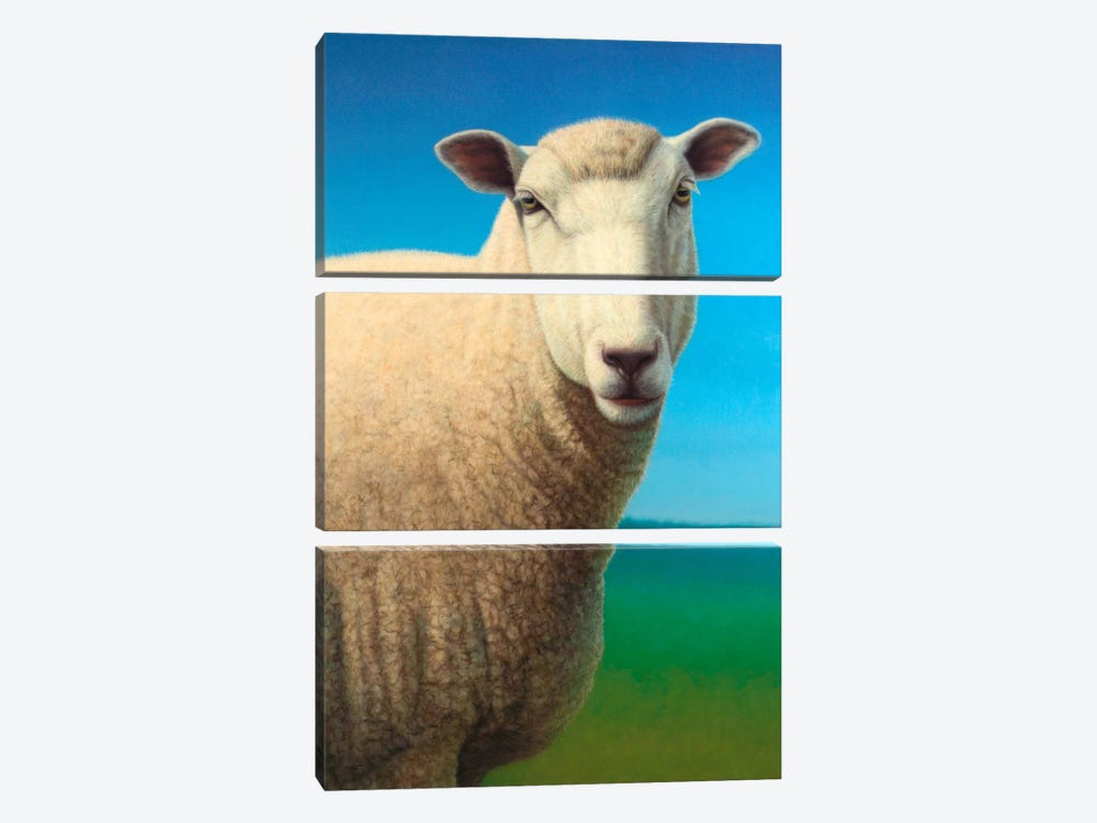 Sheep by James W. Johnson 3-piece Canvas Art Print