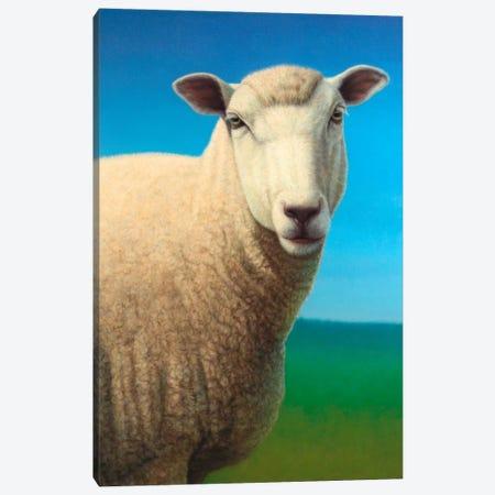 Sheep Canvas Print #JJN39} by James W. Johnson Canvas Art Print