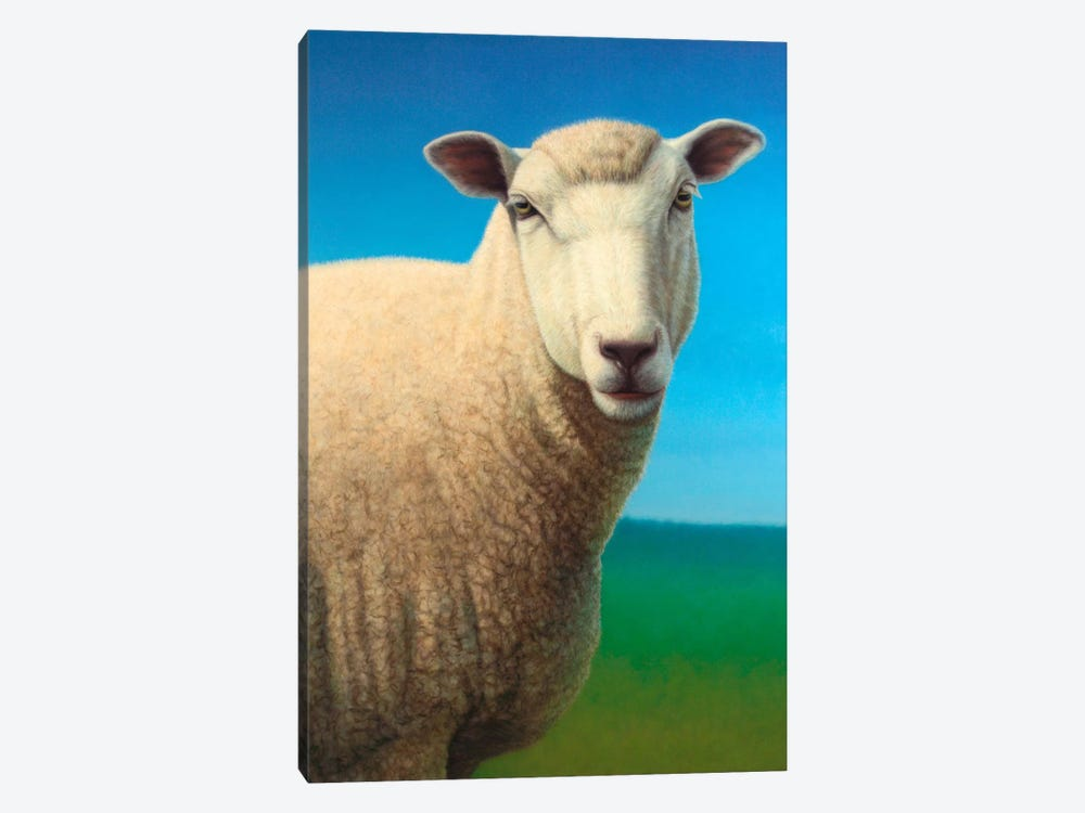Sheep by James W. Johnson 1-piece Canvas Print