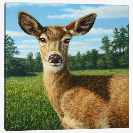 A Sunny Doe Canvas Print #JJN3} by James W. Johnson Art Print