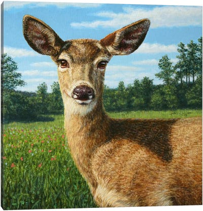 A Sunny Doe Canvas Art Print