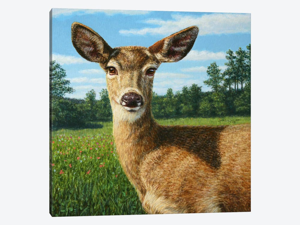 A Sunny Doe by James W. Johnson 1-piece Canvas Art Print