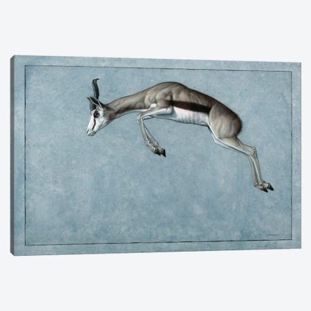 Springbok Canvas Print #JJN41} by James W. Johnson Canvas Wall Art
