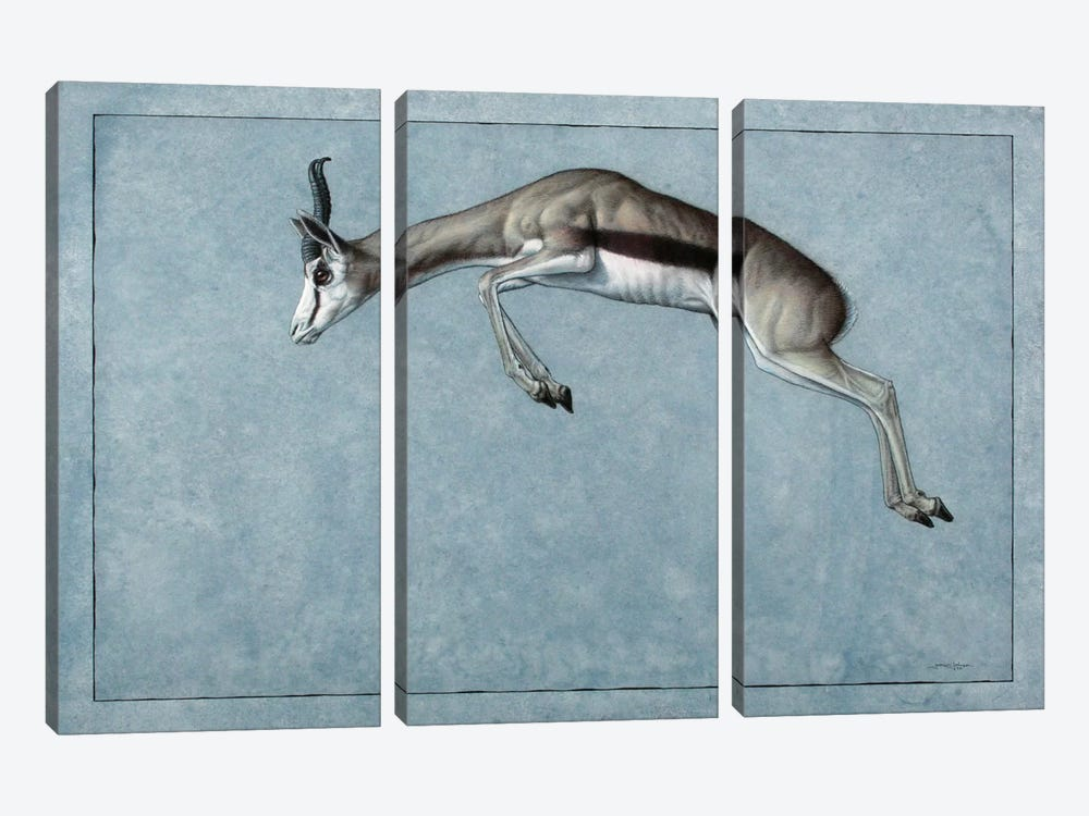 Springbok by James W. Johnson 3-piece Canvas Artwork