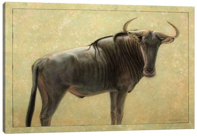 Wildebeest Canvas Art Print