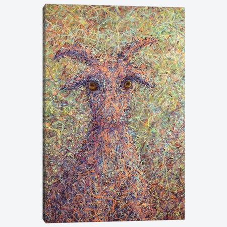 Wildgoat Canvas Print #JJN49} by James W. Johnson Canvas Art
